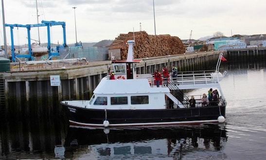 'dolphin Spirit' Boat Dolphin Tours In Inverness