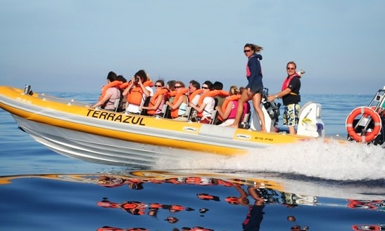 'terrazul' Boat Dolphin & Whale Watching Tours In Vila Franca Do Campo