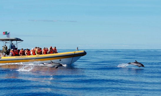 'terrazul I' Boat Dolphin & Whale Watching Tours In Vila Franca Do Campo