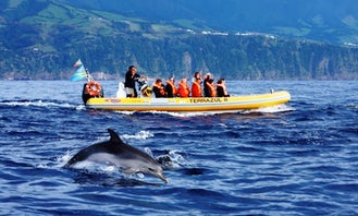 'Terrazul II' Boat Dolphin & Whale Watching Tours in Vila Franca Do Campo