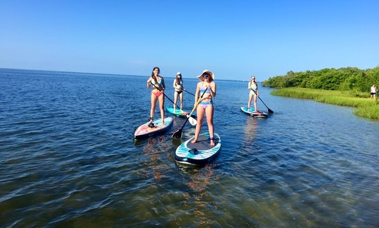 Sup Rental, Yoga, Lessons & Tours In Tampa