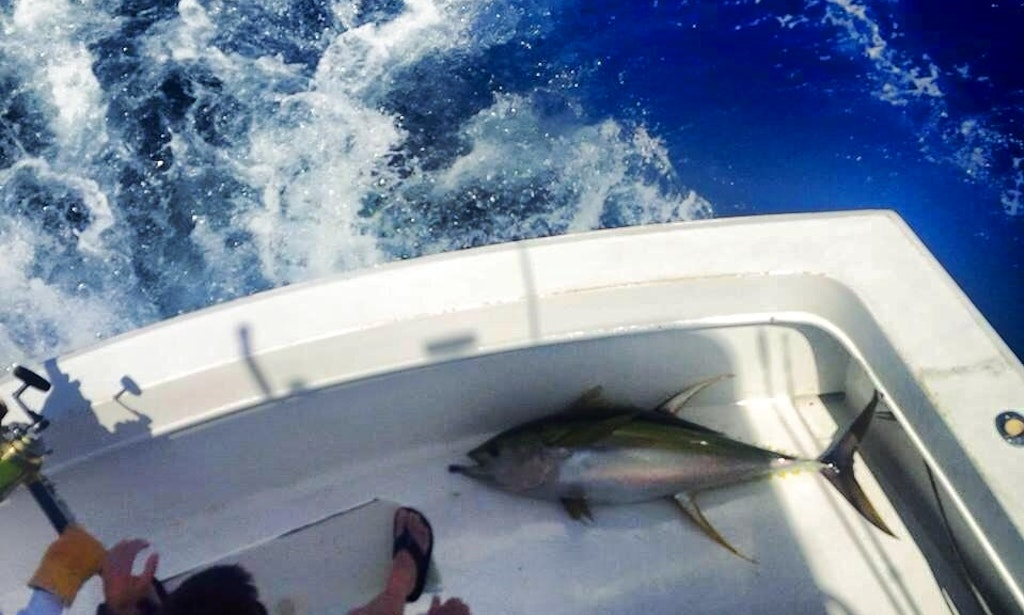 Fishing charter on 24 39 grady white center console in san for Fishing in san juan puerto rico