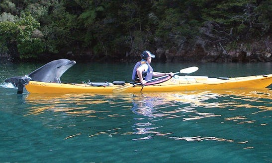 Kayak Rental In Linkwater