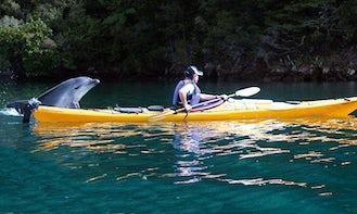 Kayak Rental In Linkwater