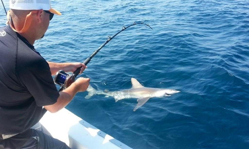 Inshore fishing charter on 26 39 sea fox boat in destin for Inshore fishing destin fl