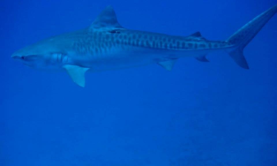 46' Newton Boat Dive Trips & PADI Certification in Miami