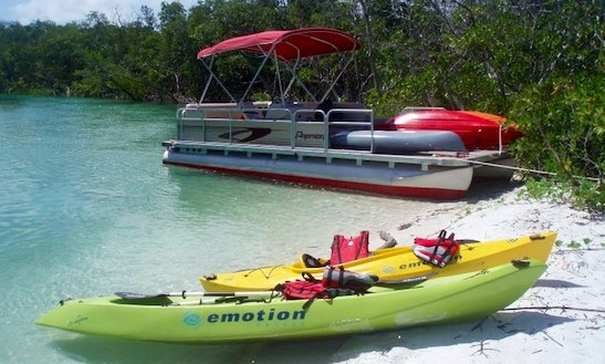 Guided Kayak Tours In Marco Island