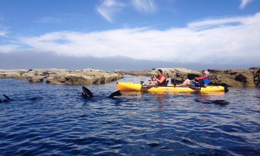Guided Kayak Tours In Kaikoura