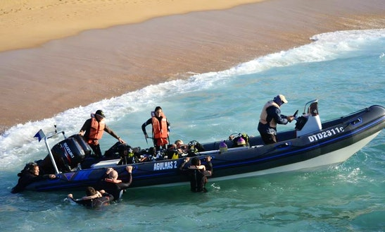 Rib Diving Trips In Scottburgh, South Africa