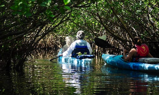 Guided Kayak Tour On Indian River Lagoon