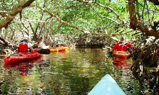 Group Kayaking Tours & Rentals In Big Pine Key, Florida