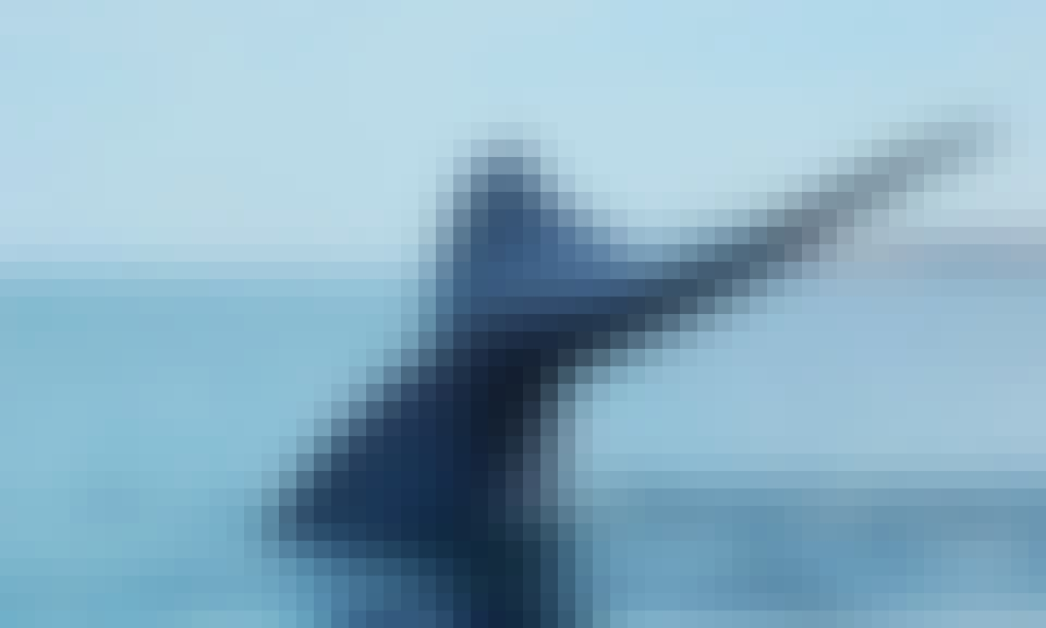 Blue Whale Watching February to March