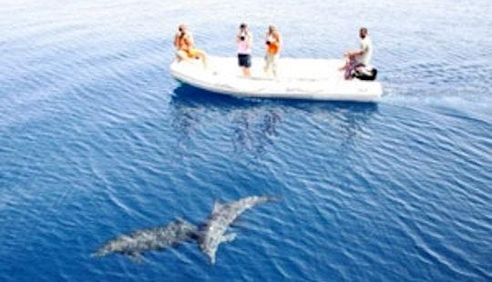 Rib Diving Trips In Hurghada, Egypt