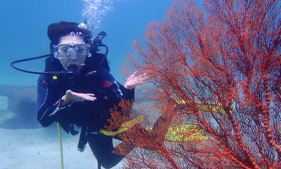 Exciting Diving Trips In Sanur Or Serangan Area In Bali, Indonesia