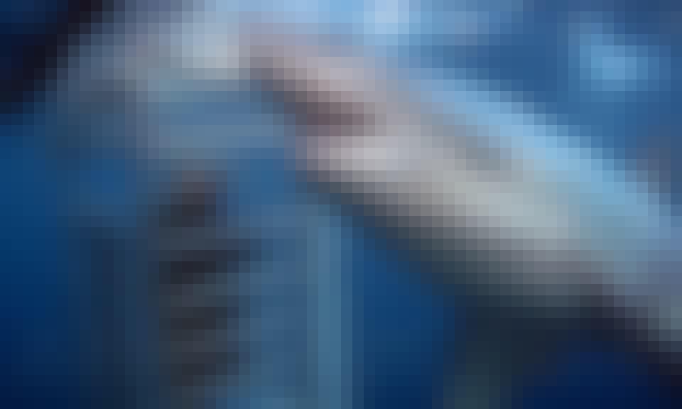MV Rodney Fox' Liveaboard Shark Expeditions
