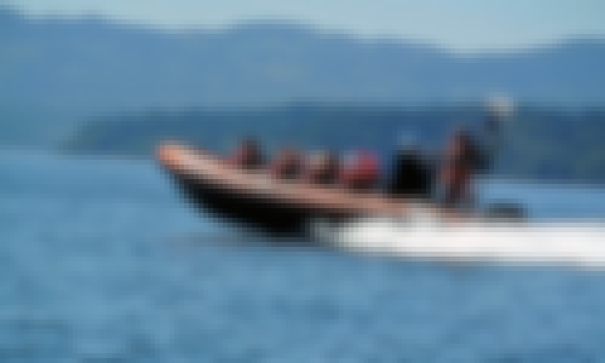 RIB Whale Watching Tours & Charter in Cowichan Bay