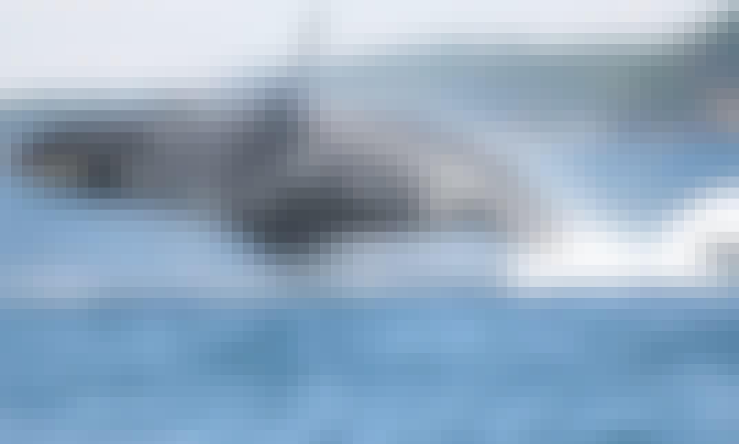 RIB Whale Watching Tours & Charter in Cowichan Bay