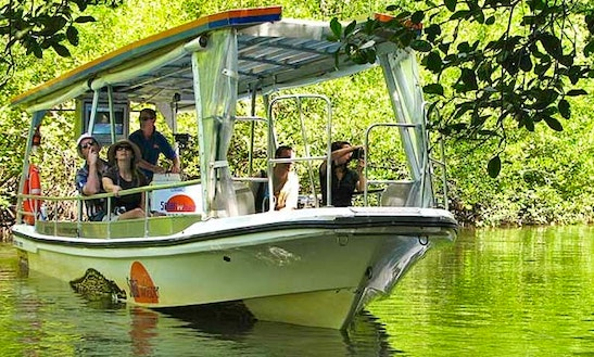 Wildlife Cruise On Daintree River