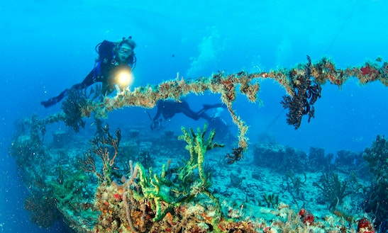 Diving Trips & Padi Certified Courses In Boca Raton
