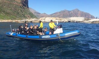 Snorkel With Seal Trip In Cape Town