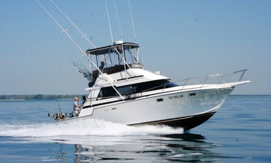 34' Sport Fisherman Fishing Charter In Waukegan,  Illinois