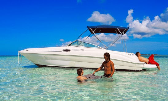 Charter Sea Ray 240 Sundeck Boat In West Bay