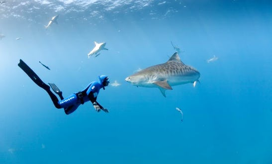 Shark Diving Expeditions In Durban