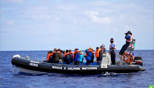 Whale And Dolphin Watching Tour In Horta