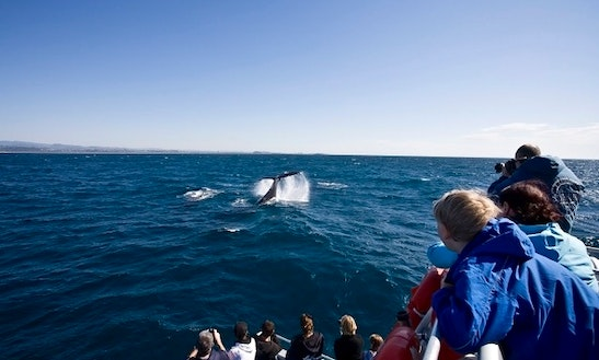 Whale Watching Tour In Kingscliff