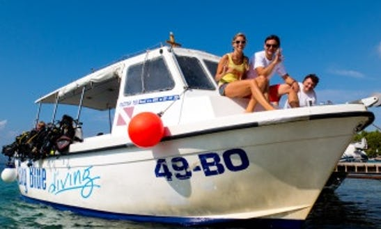 Diving Trips In Bol, Croatia