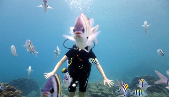 Regular & Specialty Diving Courses In Tambon Chalong