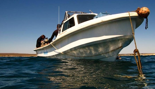 Discover Scuba Diving In Puerto Madryn