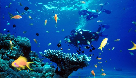 Diving Trips & Courses In The Red Sea