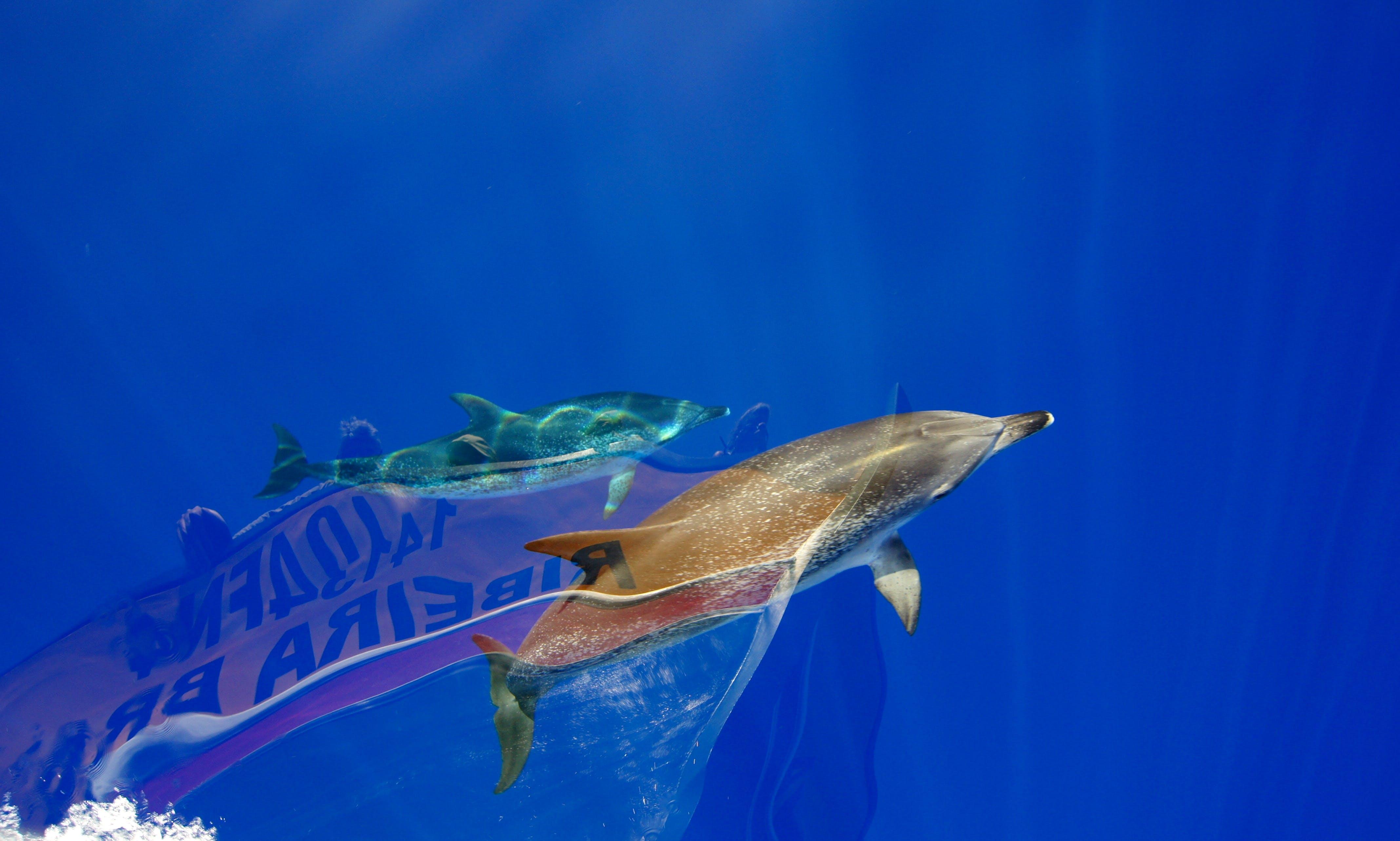 "Whale Watching Trip On ""Ribeira Brava"""