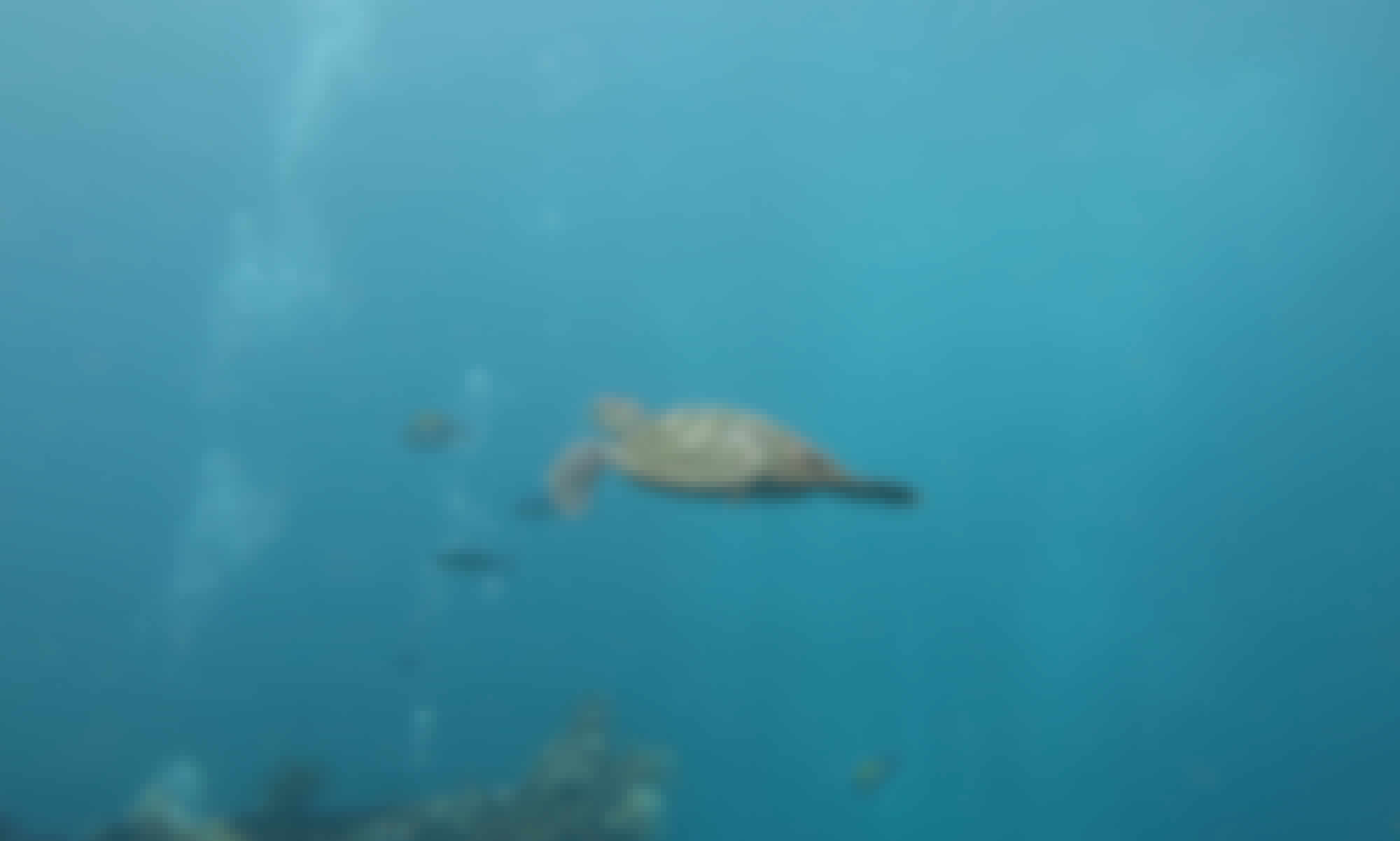 Learn Scuba Diving & Enjoy Fun-Dives around Bali with diving CANDIDASA