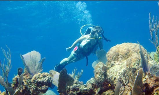 Diving Vacation Trip In Andros Island