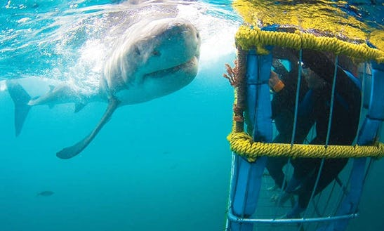 Cape Town Shark Diving Tours With Shark Seekers