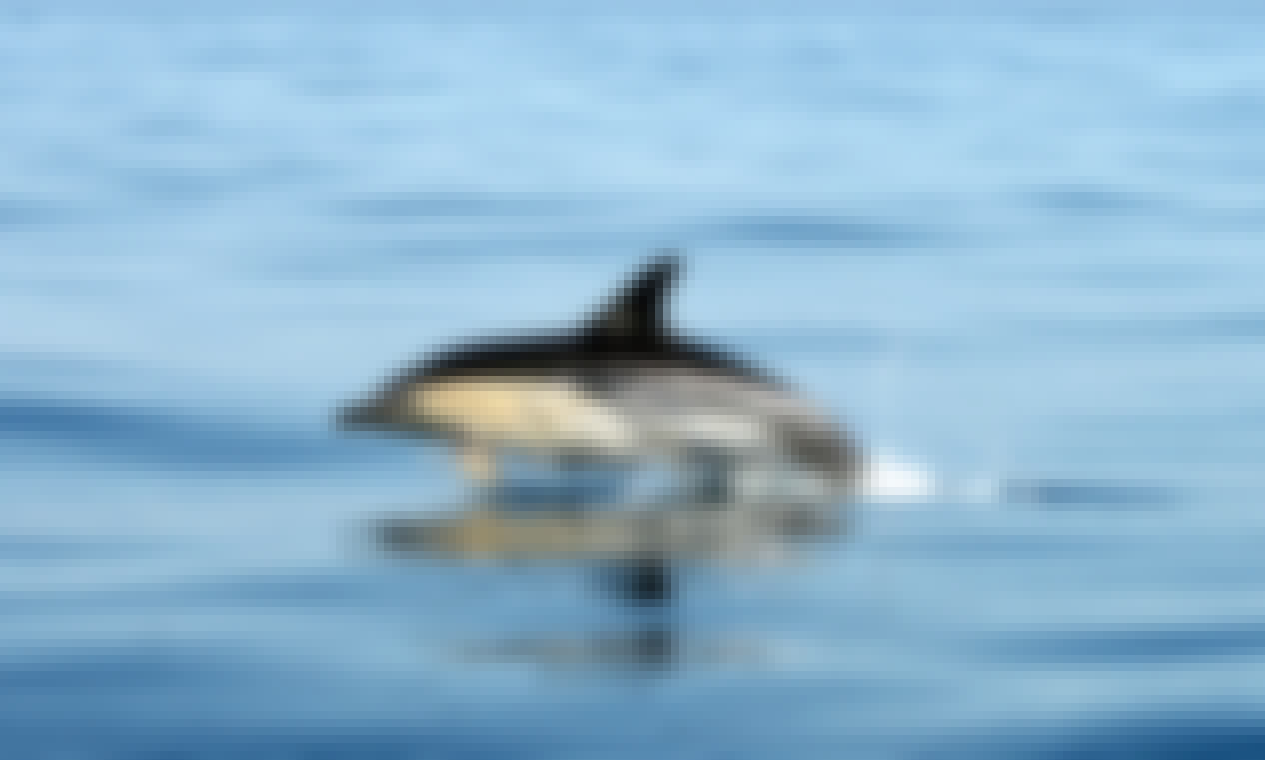 Dolphin & Whale Watching, Seabirds Watching, Coastal Tours & Fishing in Sagres