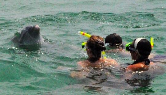 Dolphin & Snorkel Shell Island