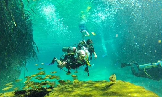 Diving On The Great Mesoamerican Reef