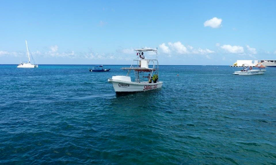 Professional Diving Trips in San Miguel, Mexico