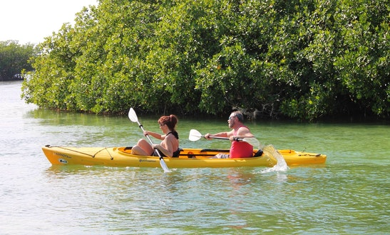 Guided Kayaking Tours On Stock Island, Florida