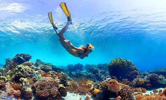 Snorkeling Trips In Stock Island
