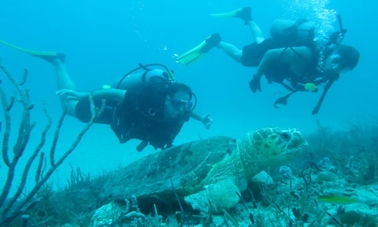 Private Guided Scuba And Snorkeling Tours In Palm Springs