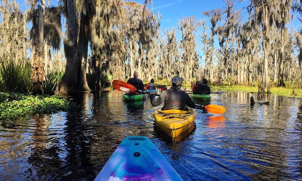 Single Kayak Swamp Tour in Manchac Wetlands