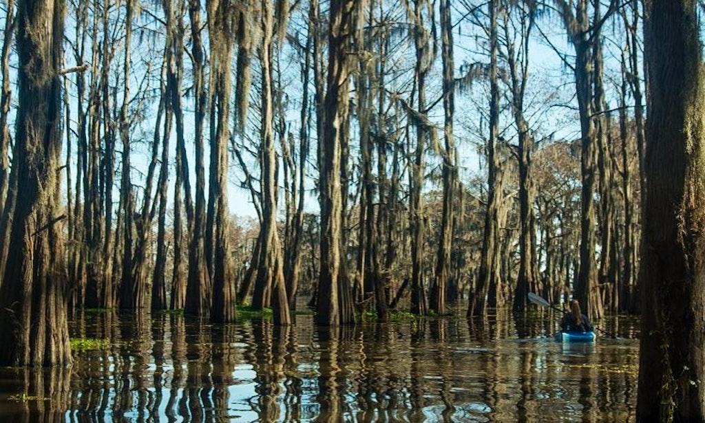 New Orleans Wetlands Tour