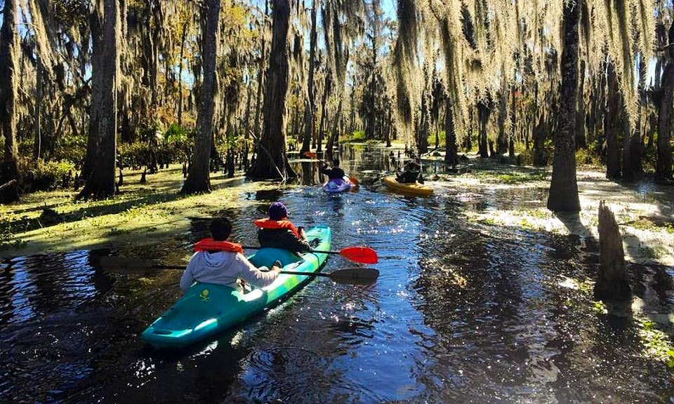Fun 3-Hour Kayak Swamp Tour in Manchac Wetlands