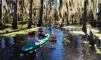 Fun 2 Hour Kayak Swamp Tour in Manchac Wetlands
