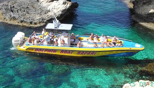 Dolphin Tour In Ayia Napa