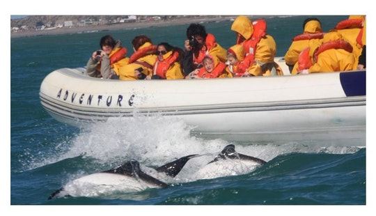 Sea Whales Tour In Puerto Madryn